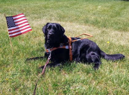OccuPaws Guide Dog Gives Owner Independence