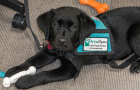 Supporting Those Who Served: OccuPaws Guide Dog Association